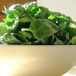 گیاهان عضله ساز کدامند؟